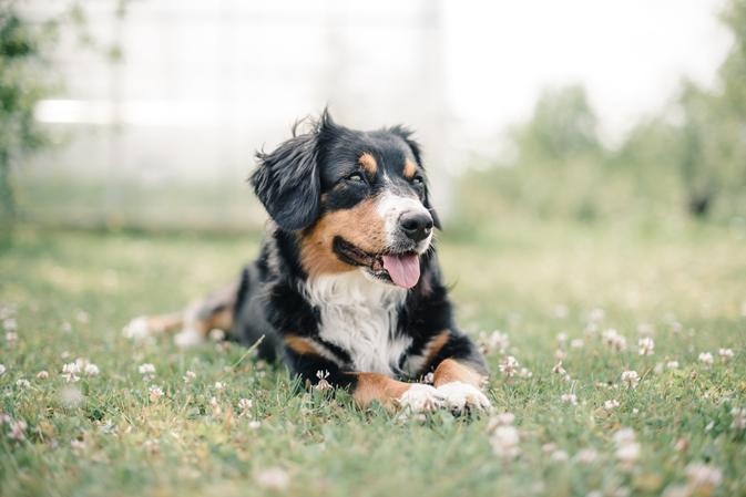 dog enjoying the sun